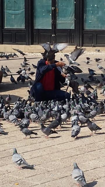 Pigeons (1) (360x640).jpg