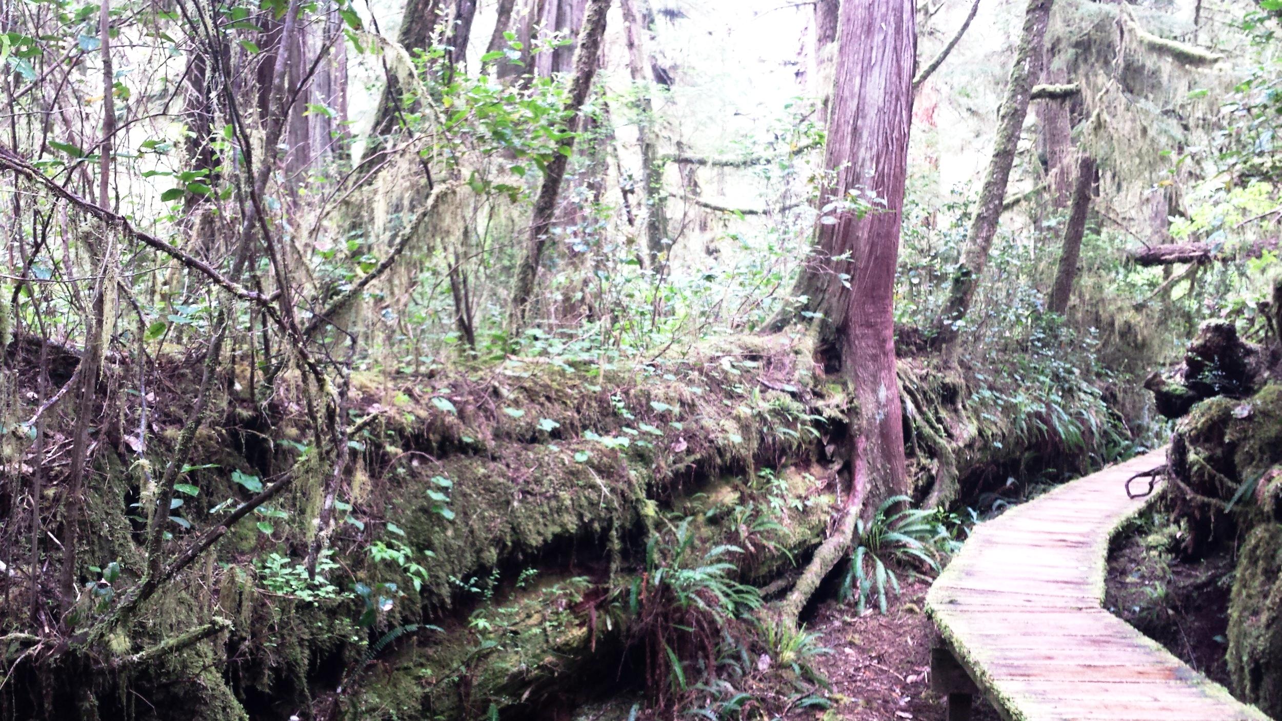 Rainforest Hike in the Pacific Rim National Park Reserve.