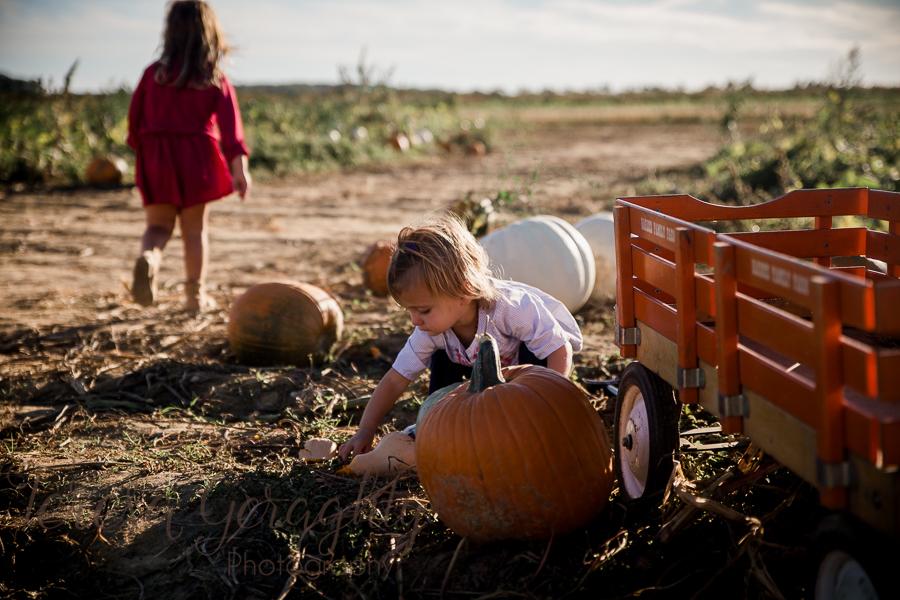 Harbes Family Farm Pumpkin Picking Photography