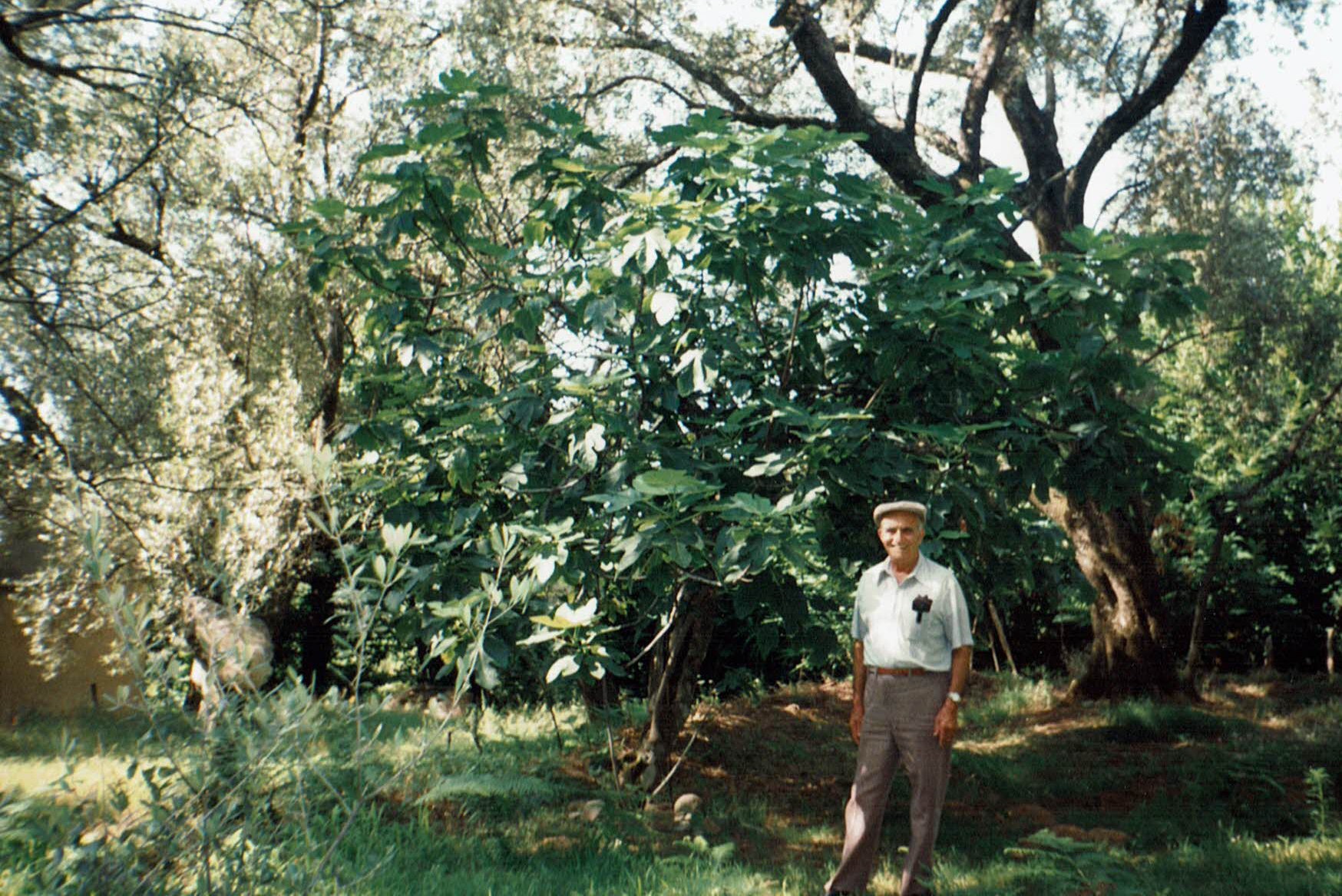 Grandpa in Oppido with the fig tree he planted