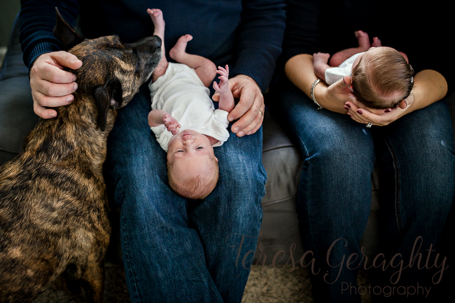 dog with newborn twins on parents' lap