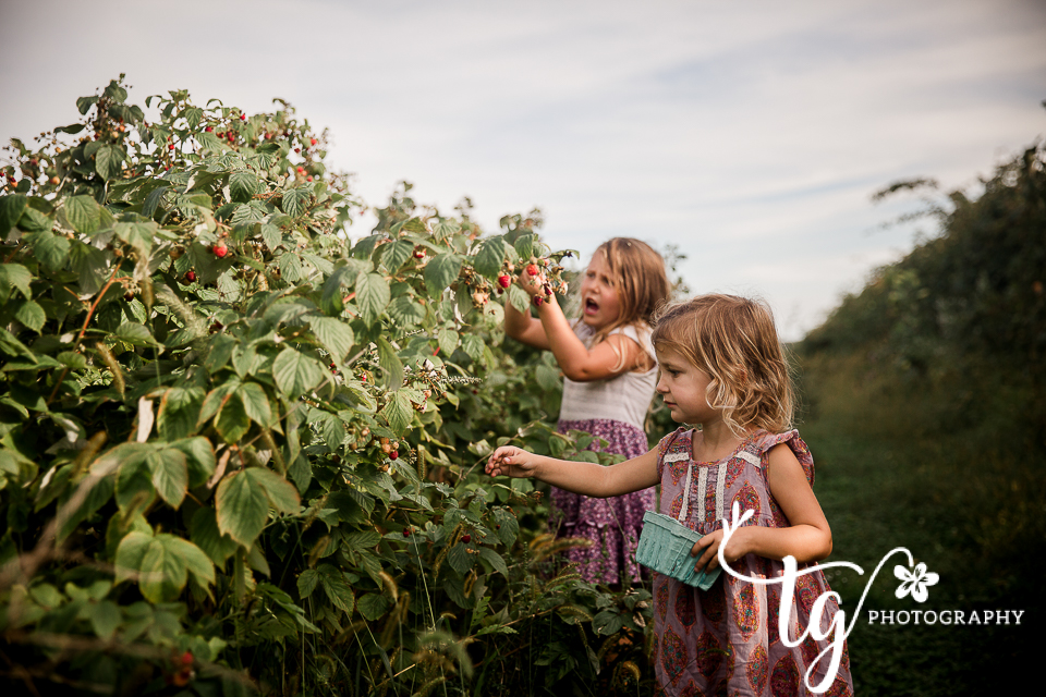 sisters picking berries