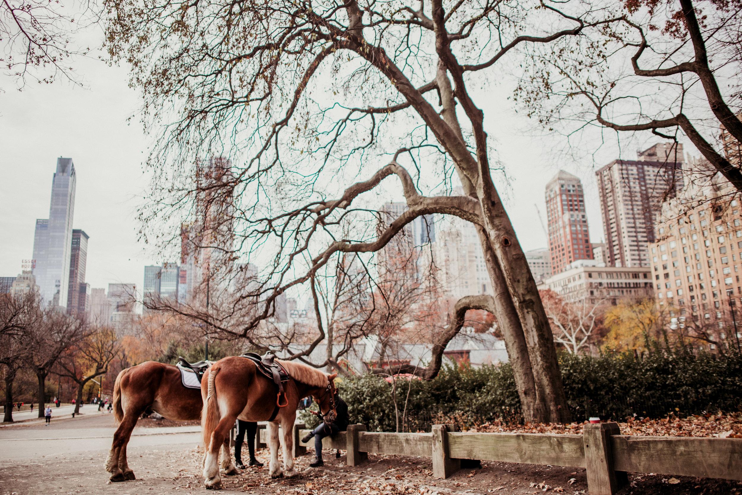 NYC-Dec2017-265.jpg