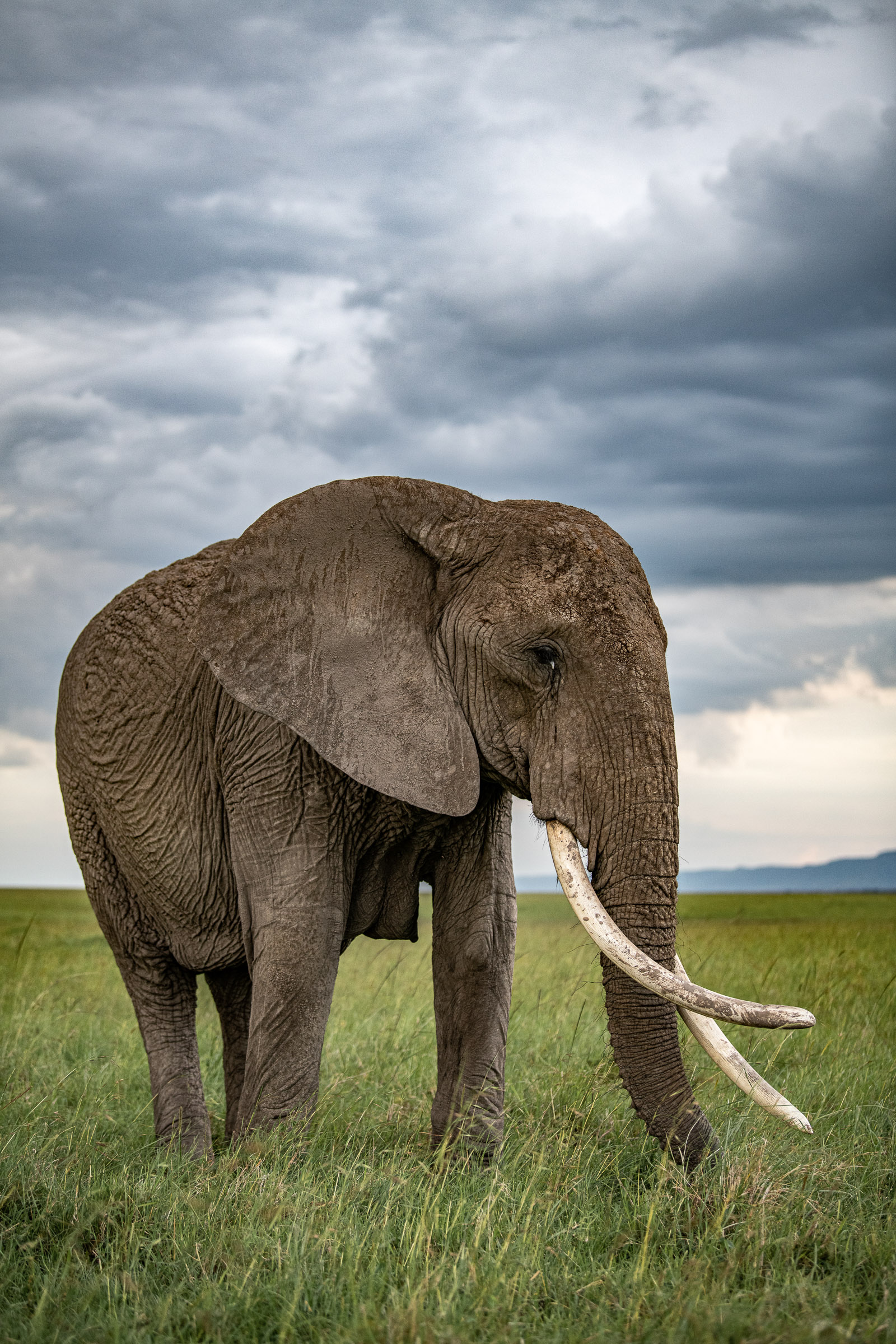 Elephant under stormy skies in the Masai Mara, Kenya, Will Fortescue