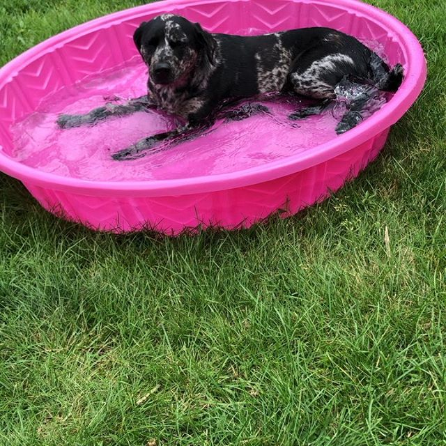 We adopted Pepper one year ago today from @rhodehomerescue ! I didn't think that I would ever be a dog person, but here we are. I'm so glad I get to share her snuggles, perpetually dirty paws, and undeniable spirit of adventure when Rob and I do anything at all (even if she's just hanging out in a kiddie pool in our backyard or snoozing adorably somewhere). Pepper, you're my favorite. 🥳🐶❤️