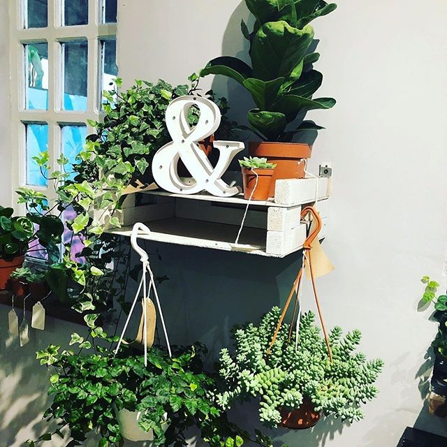 Hanging around @babyjungleplantss  plant room🌱🌱🌱 at @tenstreetsmarket just around the corner from @stanleydock . . . . . plantstyling #plantsofinstagram #ivy #succulents #sedumburrito #liverpoolplants #liverpoolplantshop #plantshopping #plantshop #greenfingers #shopsmall #shoplocal #tenstreets #tenstreetsmarket #friday #fridayfeeling Repost @tenstreetsmarket