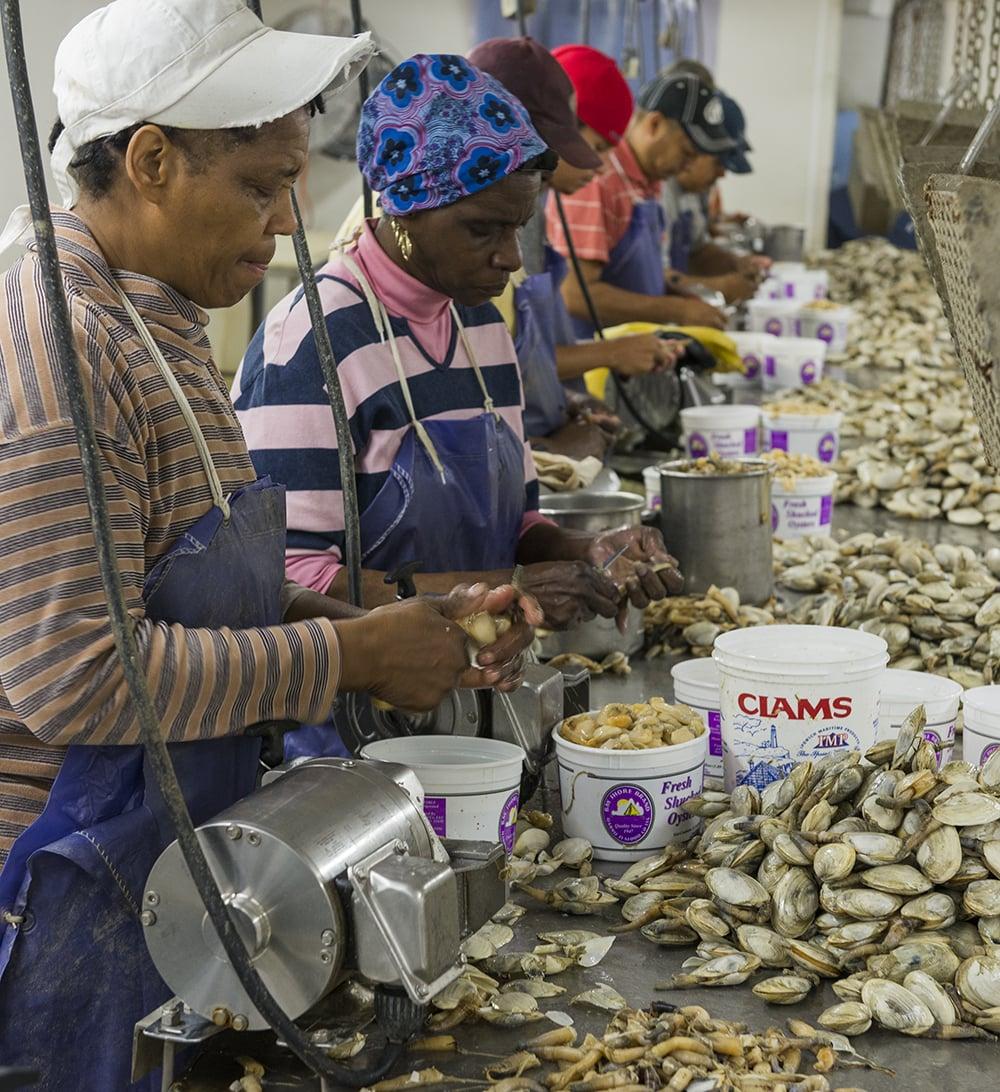 Chesapeake Bay Clamming - Market Watch  -   © Jay Fleming   09.jpg