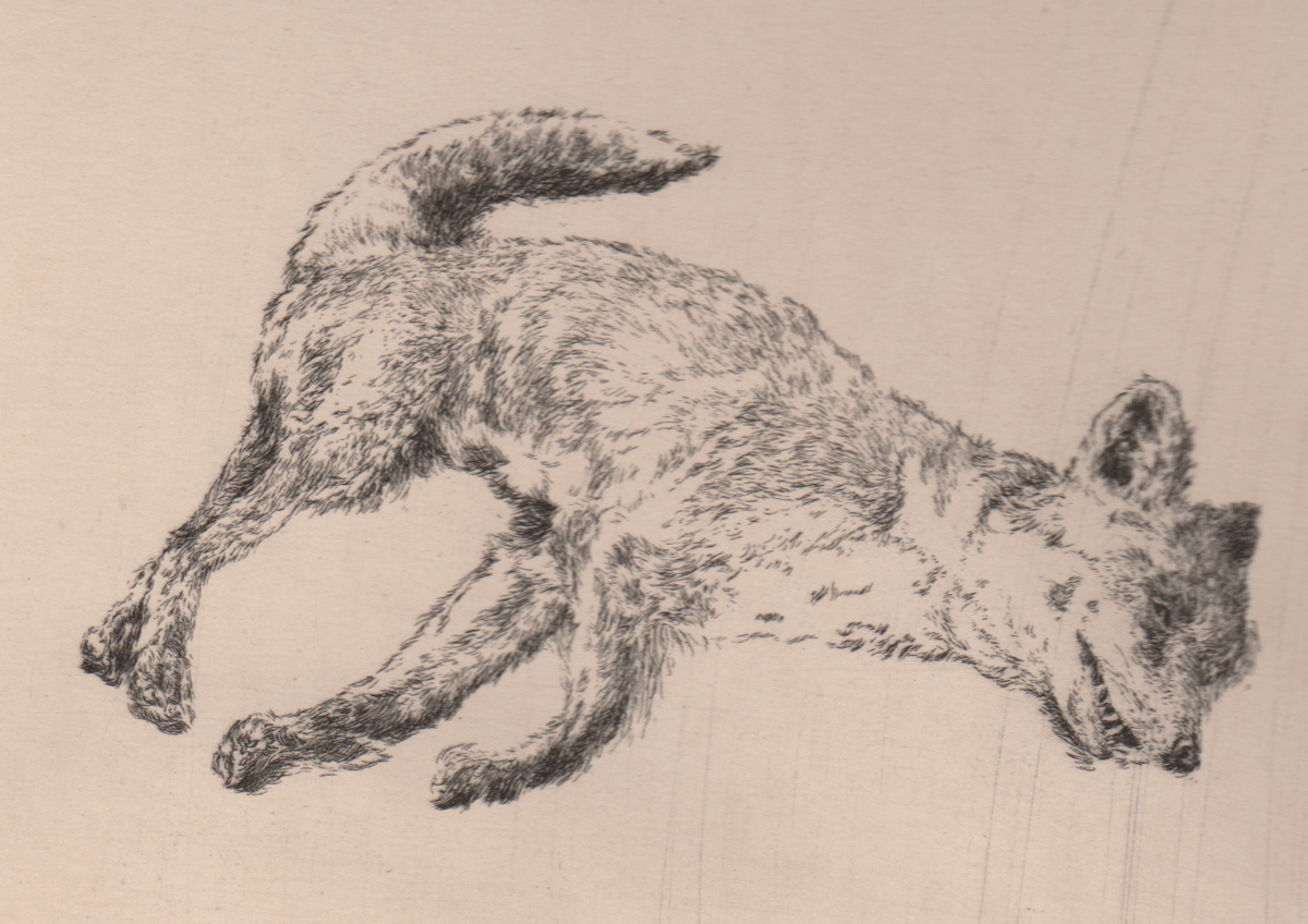 Fox Etching