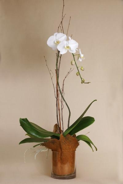 Terry Furuta Orchid Arrangement