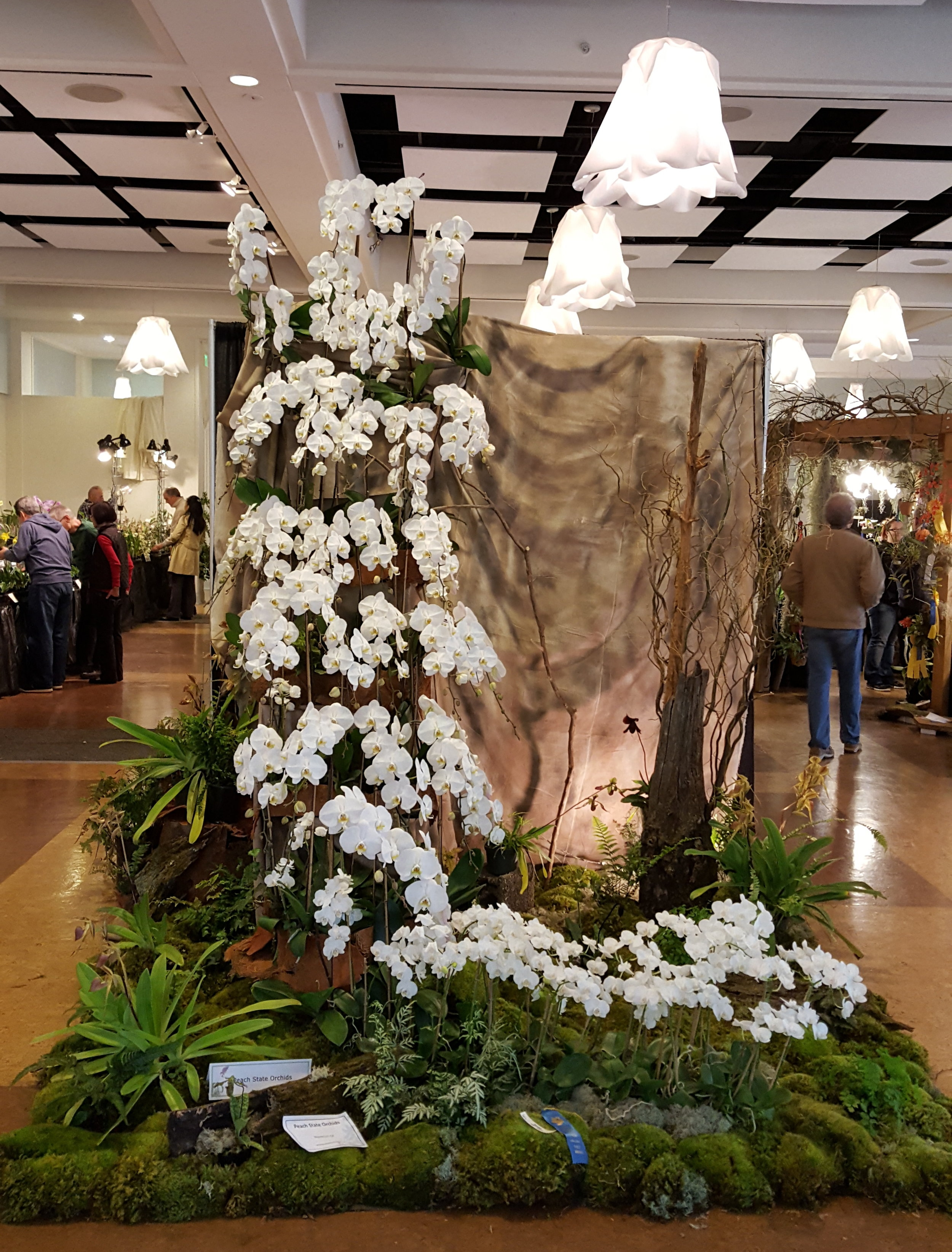 Blue Ribbon AND People's Choice award winner incorporates mosses, ferns, orchids, dried wood, fabric, light and other design elements into a 10 foot display.
