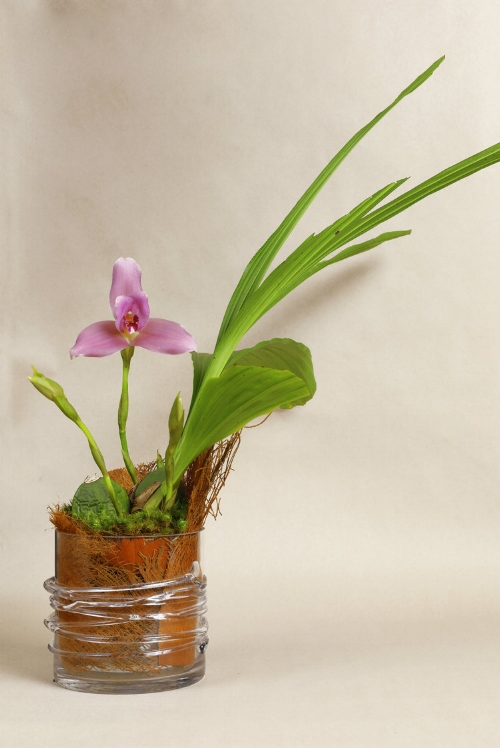 Dendrobium Orchid in Palm Bark