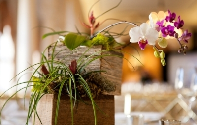 Tillandsia Arrangement with Orchid and Custom Container