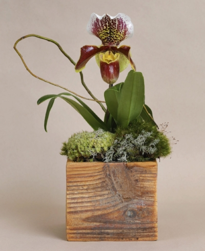 Beltline Box Reclaimed Wood Plant Container with Lady Slipper.jpg