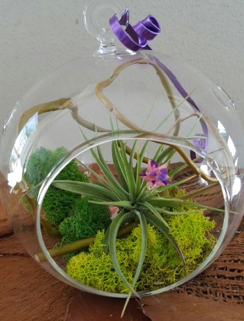 Aerium with Air Plant and Moss.jpg