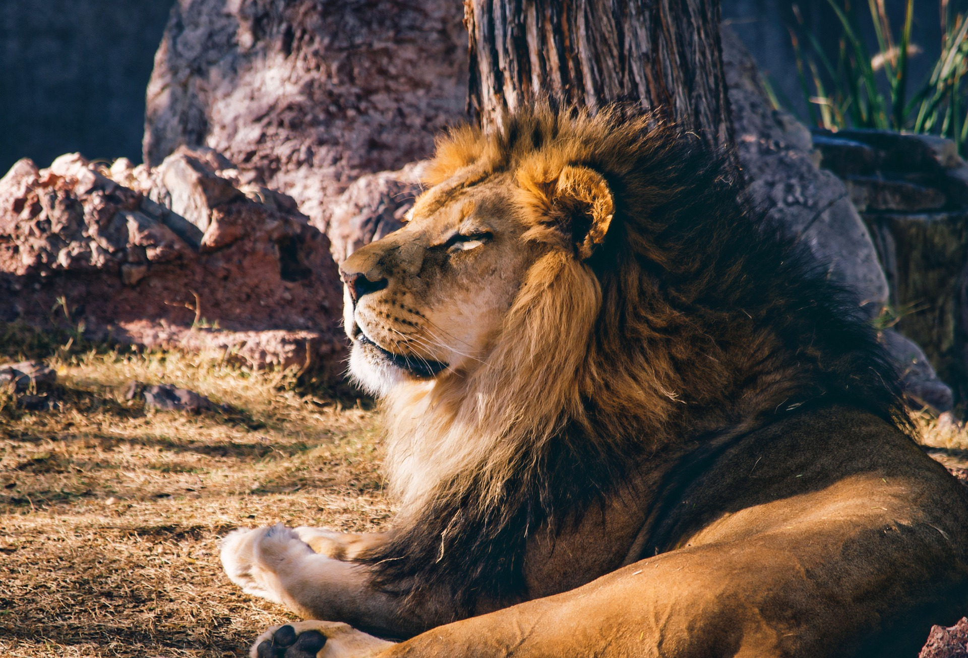 lion-1211424_1920.jpg