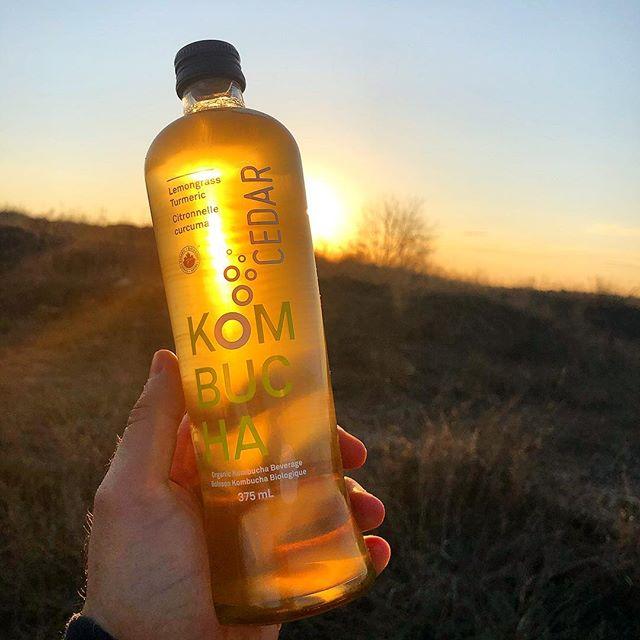 Kombucha in the morning or kombucha in the evening? • • • • • #kombucha #kombuchalove #goodhabits #healthylifestyle #digestivehealth #bestyou #guthealth #cedarjuice #fermented #mindbodyconnection #healthspo