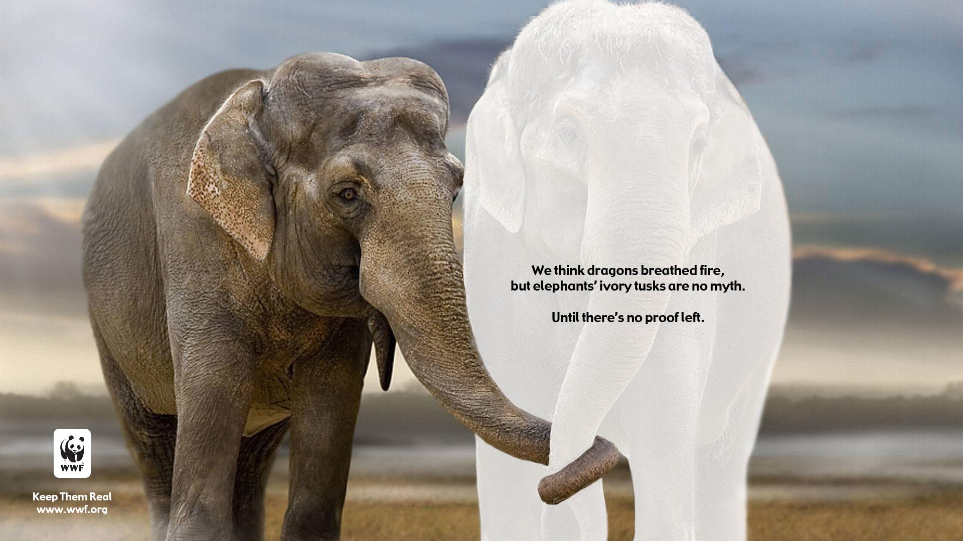 Elephant_Removed.jpg