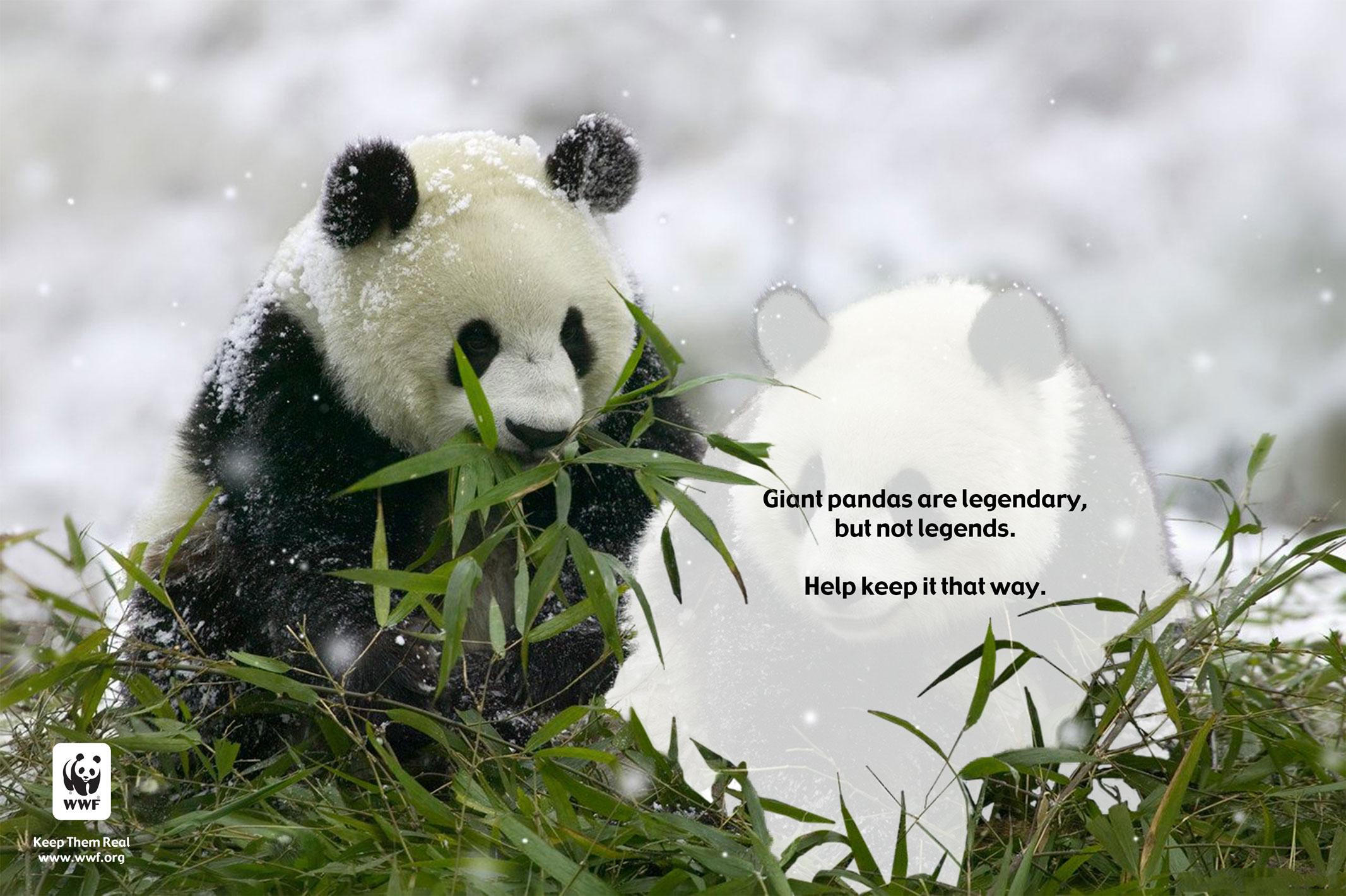 Panda_Removed.jpg
