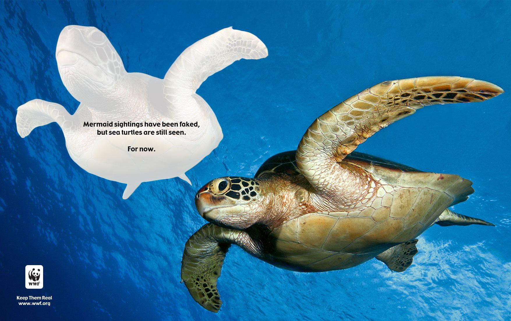 Turtle_Removed.jpg