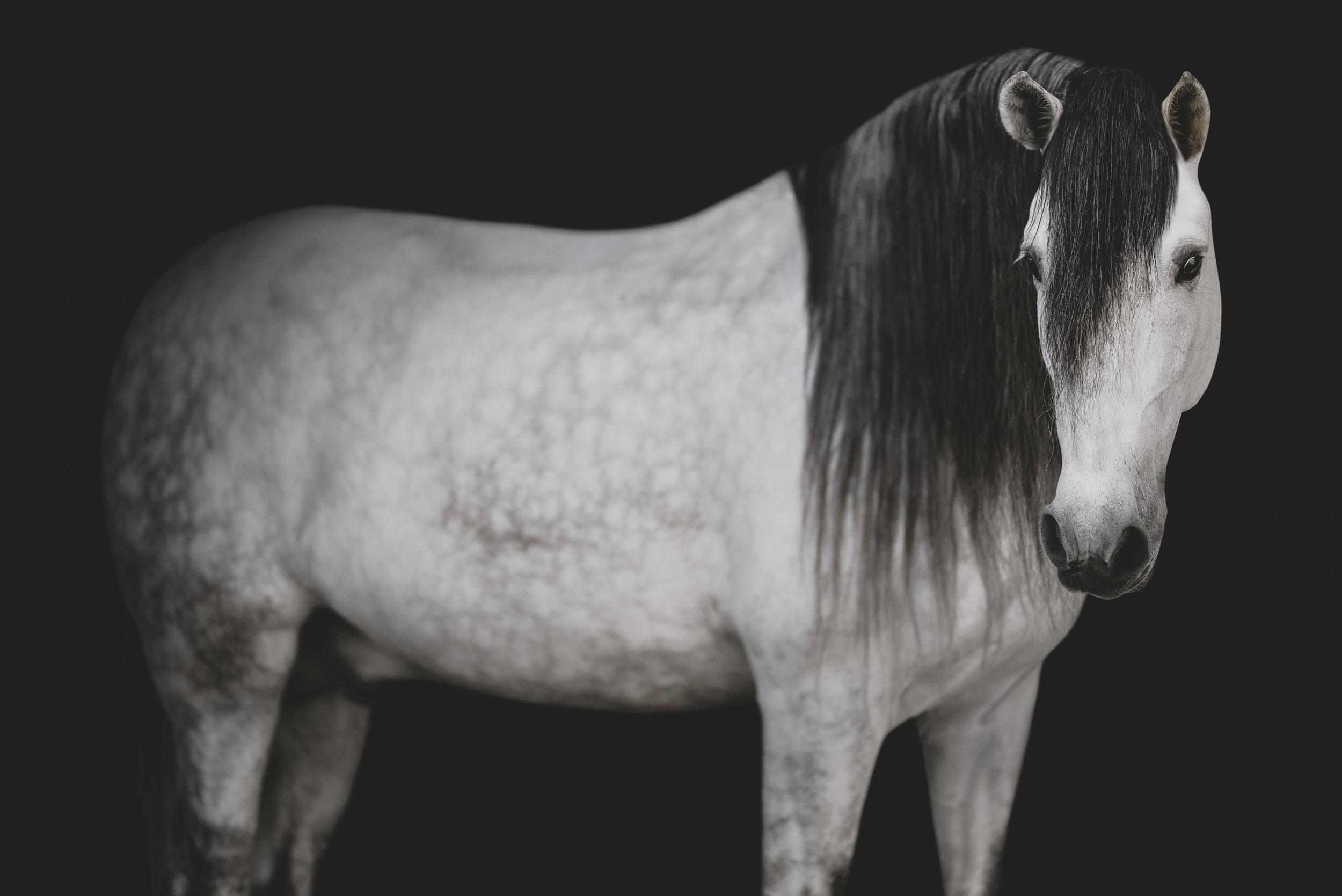 medevialtimes_horseportraits_edited-6.jpg