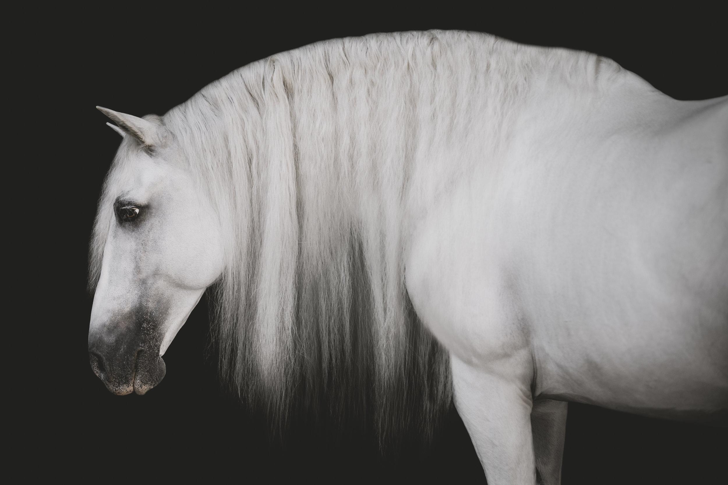medevialtimes_horseportraits_edited-2.jpg