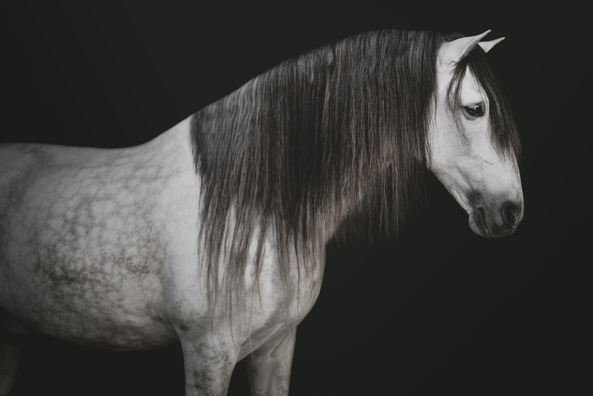 medevialtimes_horseportraits_edited-9.jpg