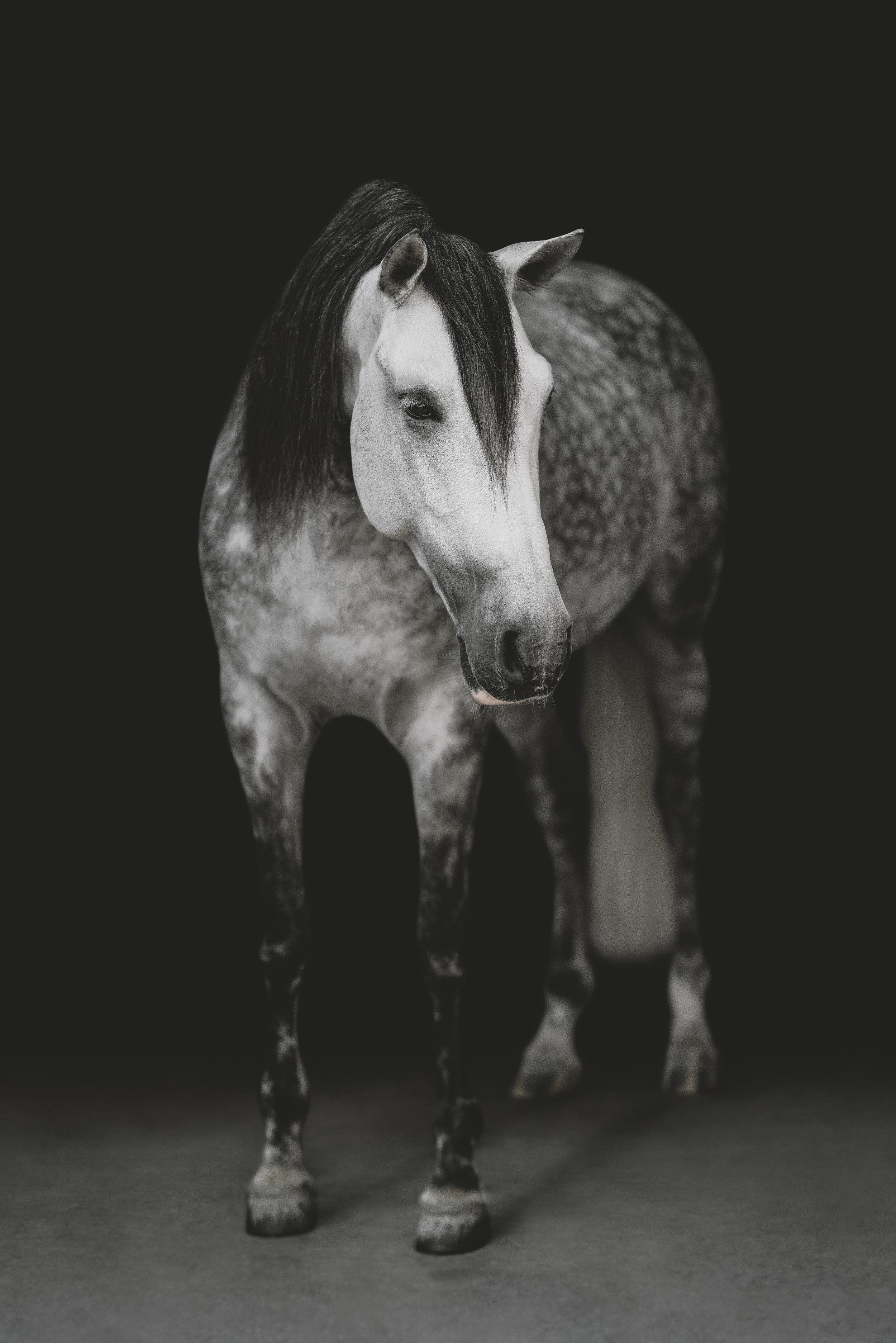 medevialtimes_horseportraits_edited-16.jpg