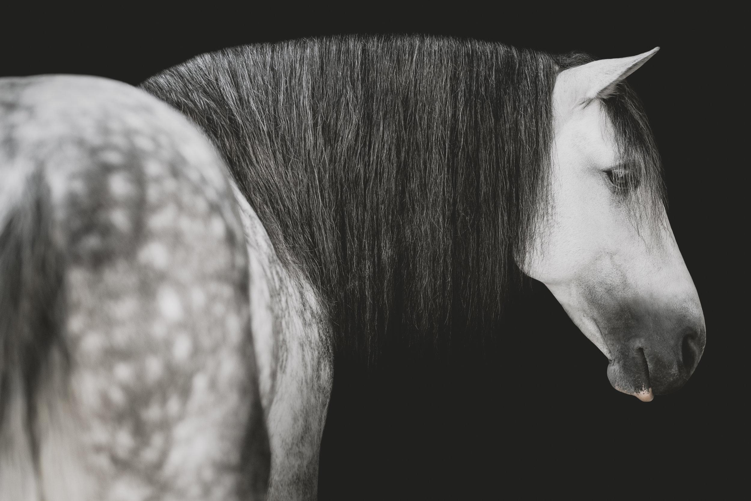 medevialtimes_horseportraits_edited-21.jpg