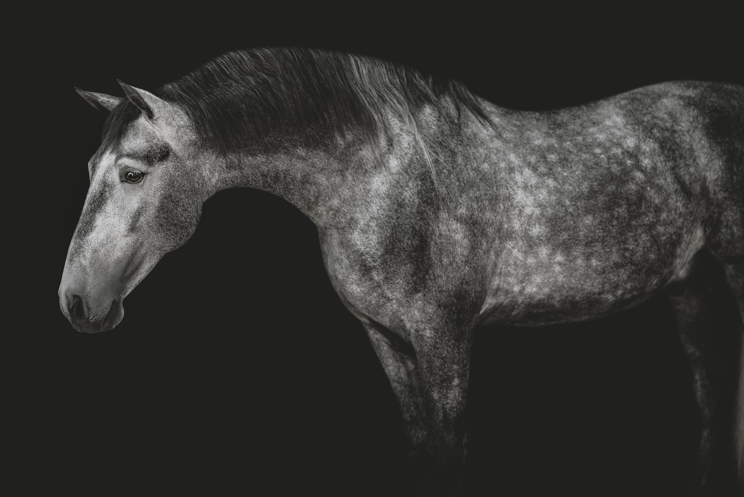medevialtimes_horseportraits_edited-34.jpg