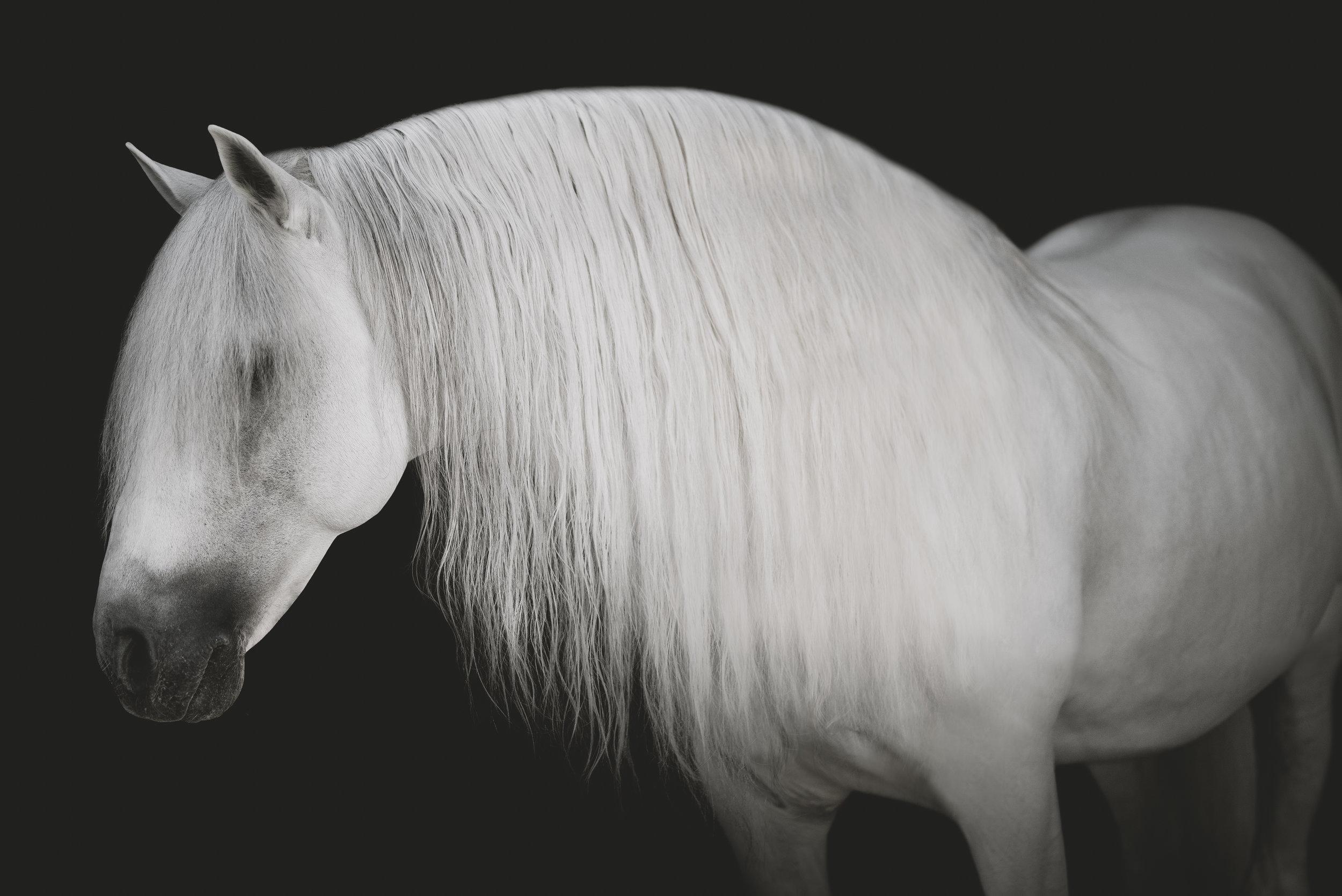 medevialtimes_horseportraits_edited-12.jpg