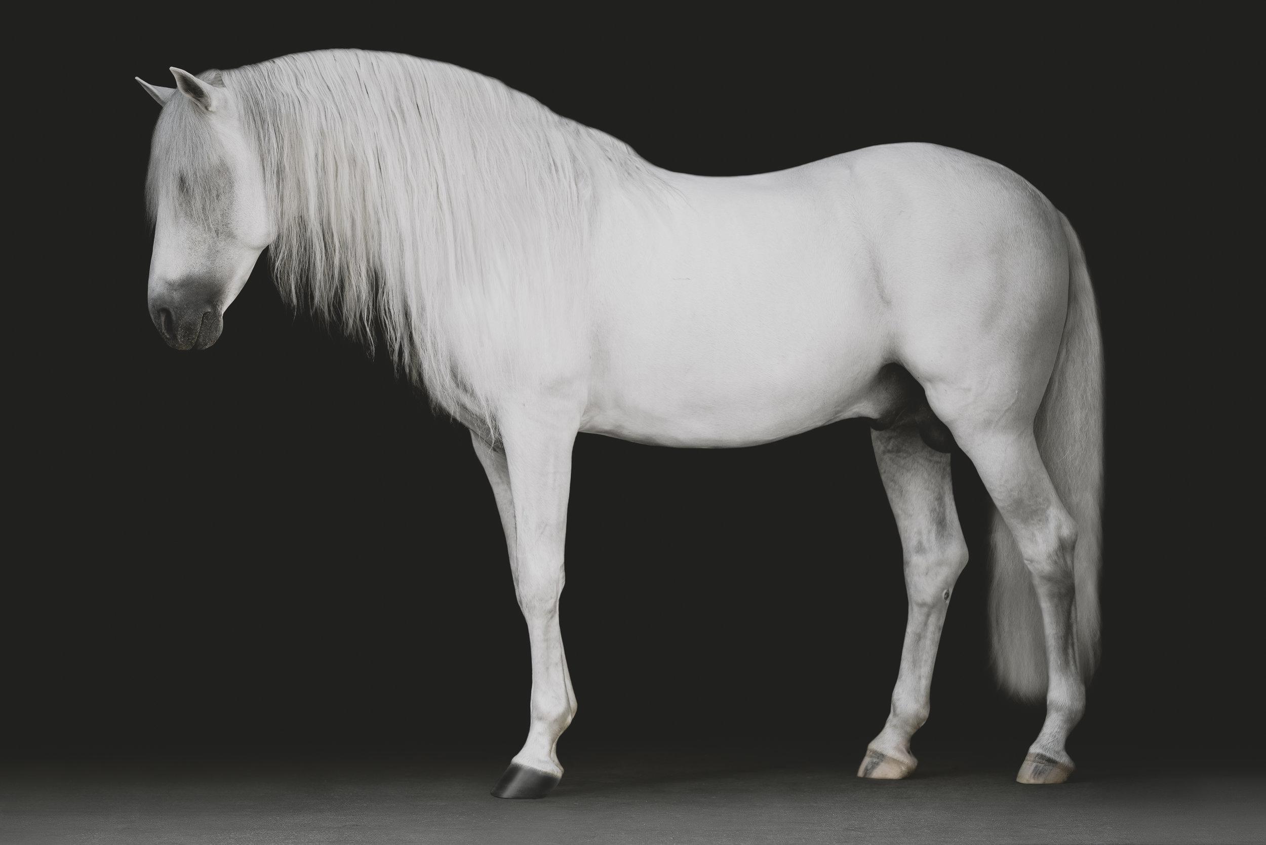 medevialtimes_horseportraits_edited-13.jpg