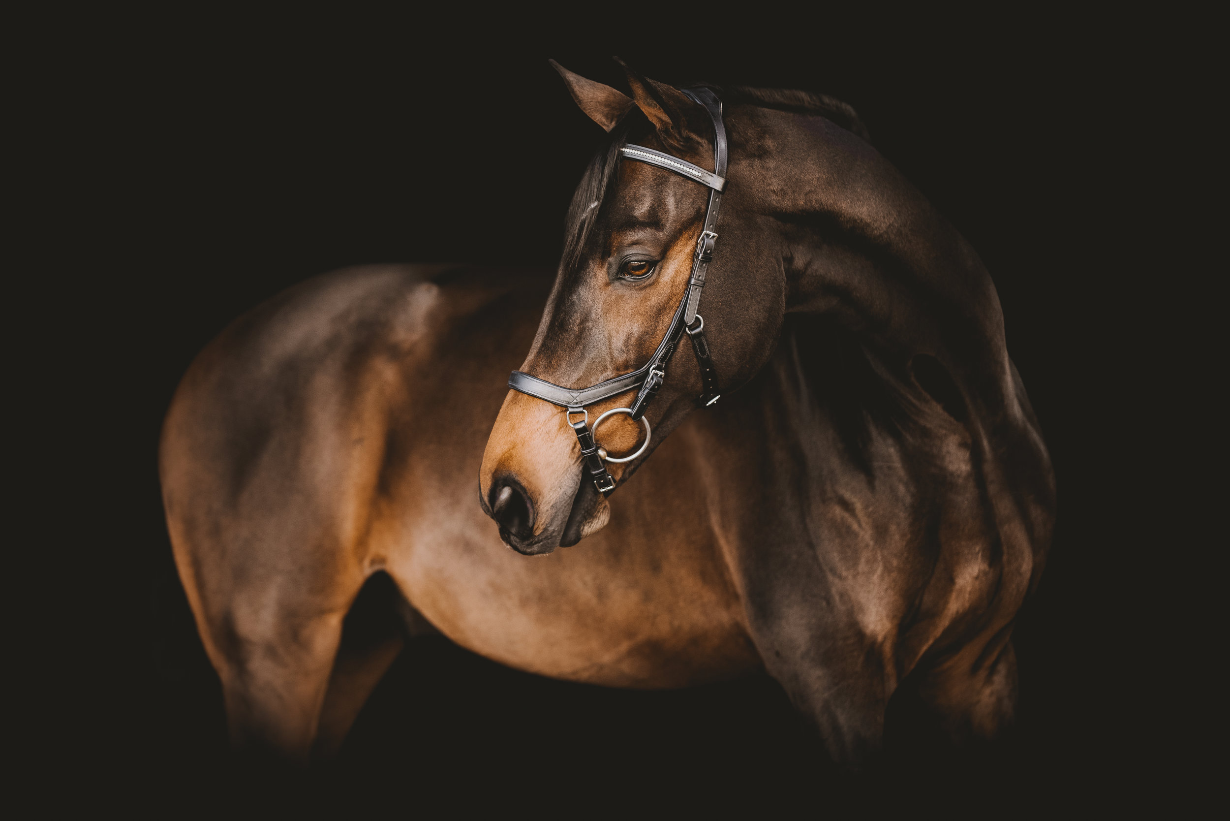 Black Background Pricing Giana Terranova Photography