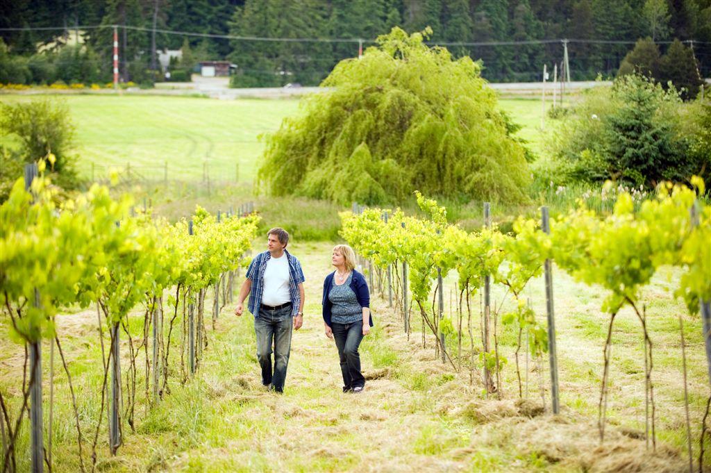 walking vineyard.jpg