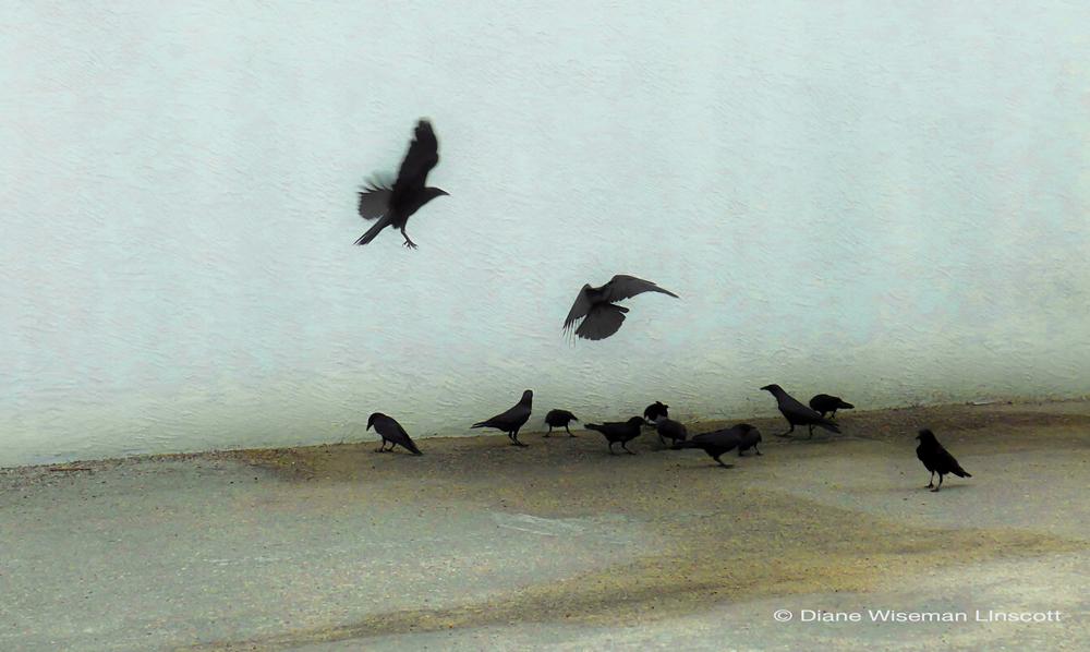 """""""Blackbird Congregation"""""""