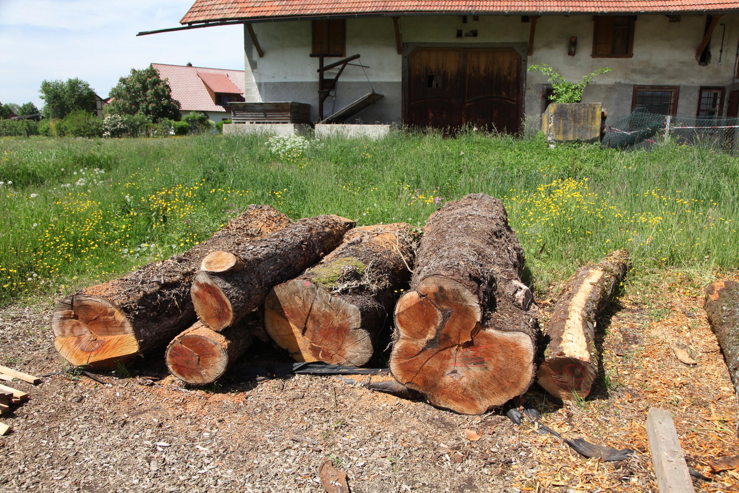 80-100 Jahre alte Birnbäume vor dem Einschnitt