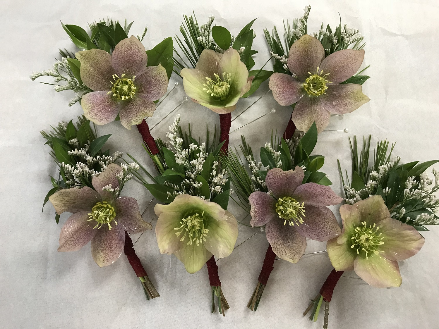 Hellebore bouts