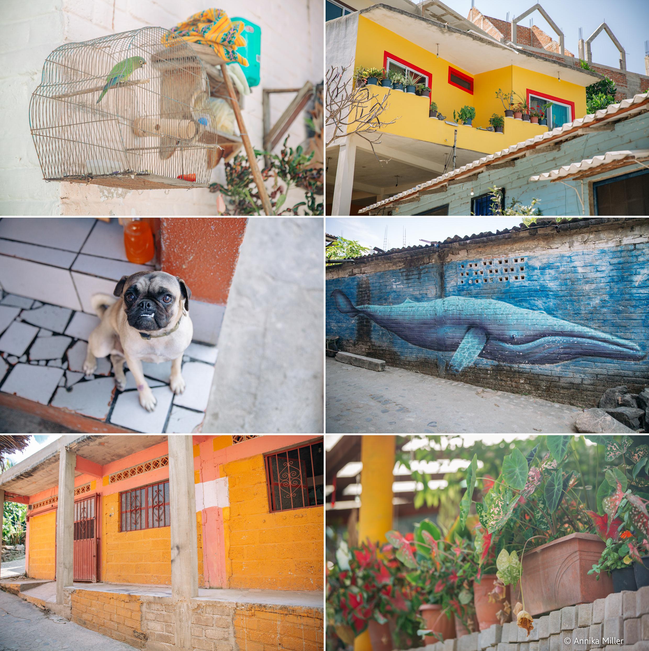 YelapaMexico19-5.jpg