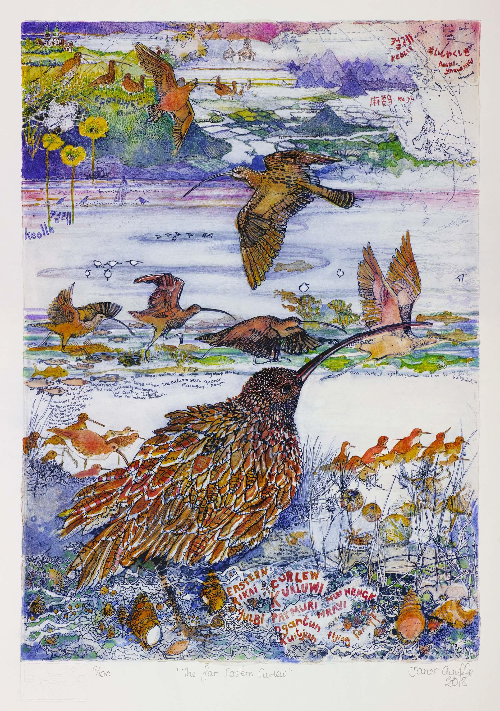 The Far Eastern Curlew