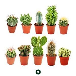 Set of 10 Cacti plants £17.80