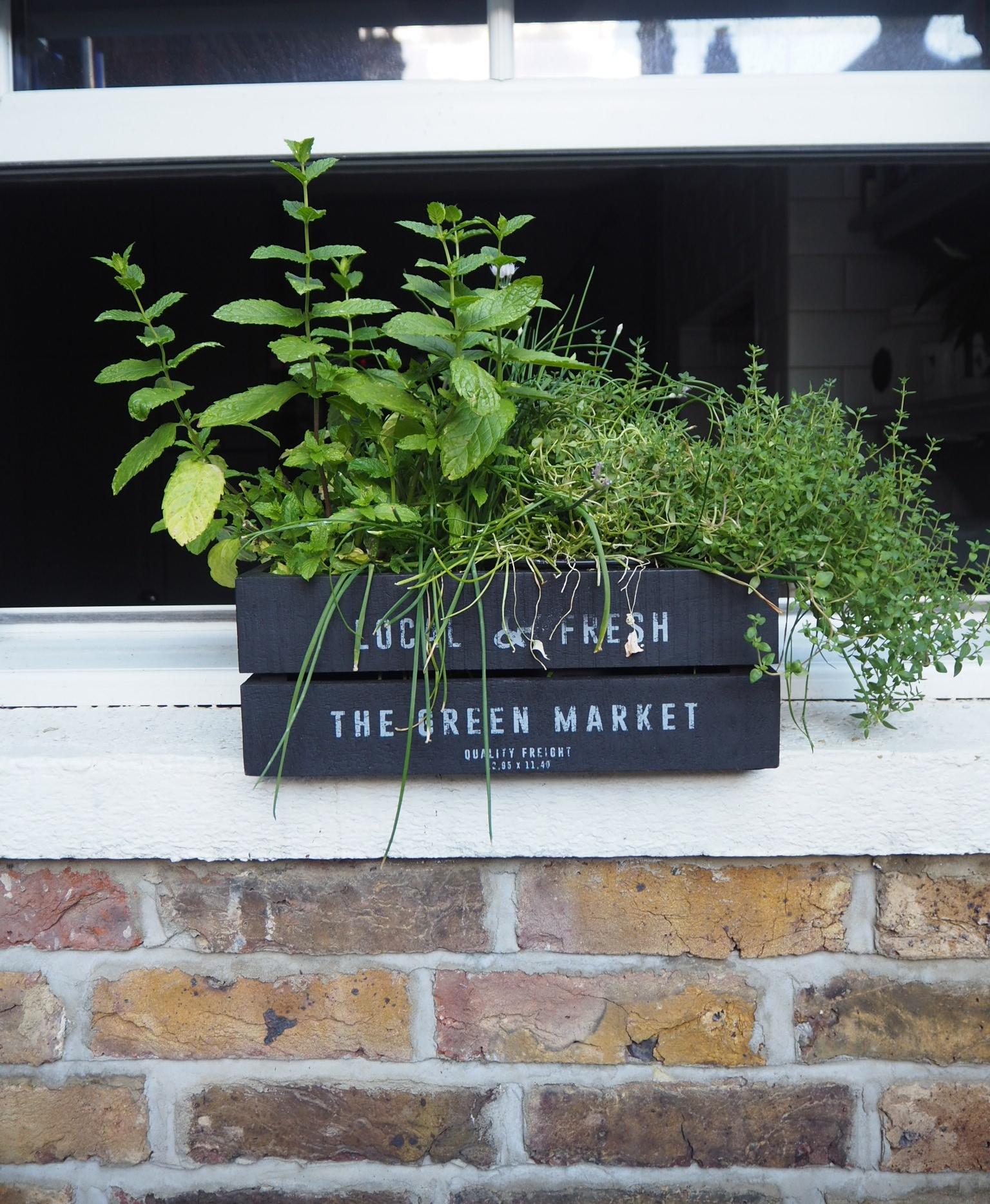 The essential herb garden window box