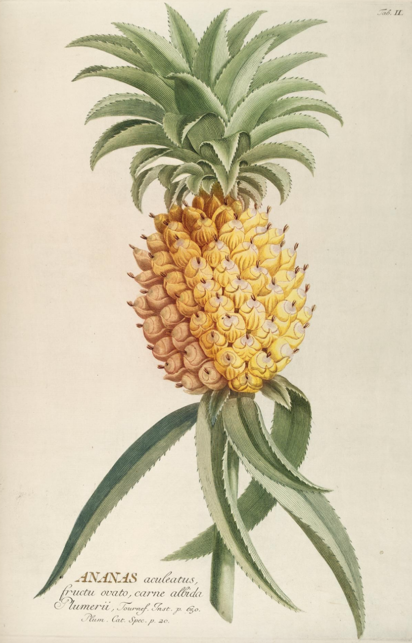 Botanical Pineapple Yellow £24