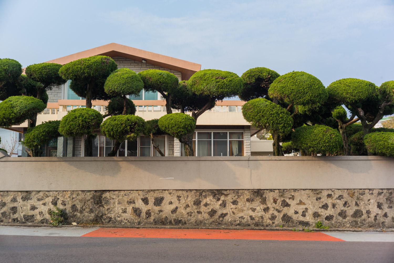 shaped trees.jpg