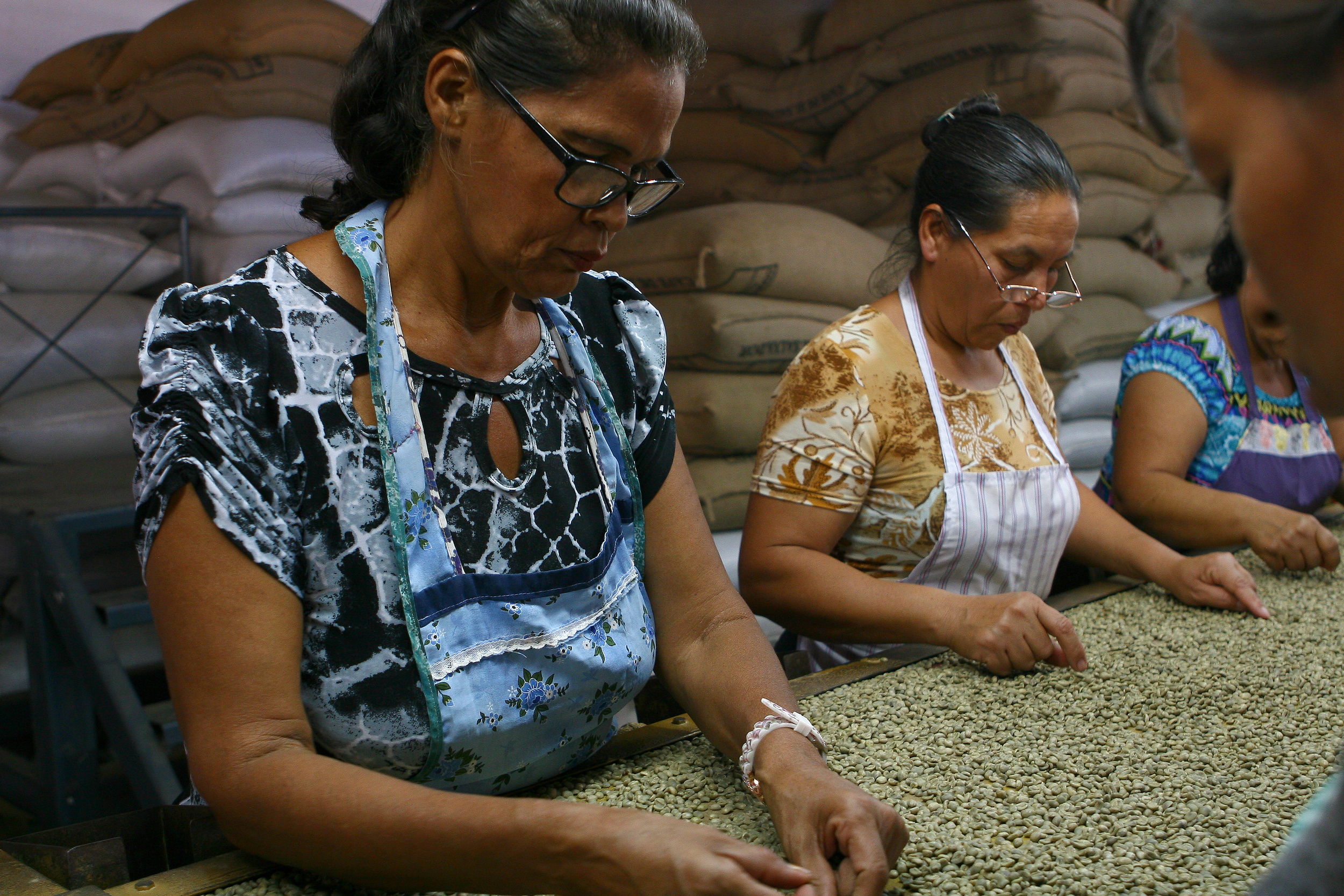 Once the coffee beans are ready for export, they go through a hulling machine that removes the coffees outermost parchment layer. the beans then go through multiple screenings in which they are separated by size, density and color. Defective beans are removed, and only the beans that meet desired quality standards are exported.