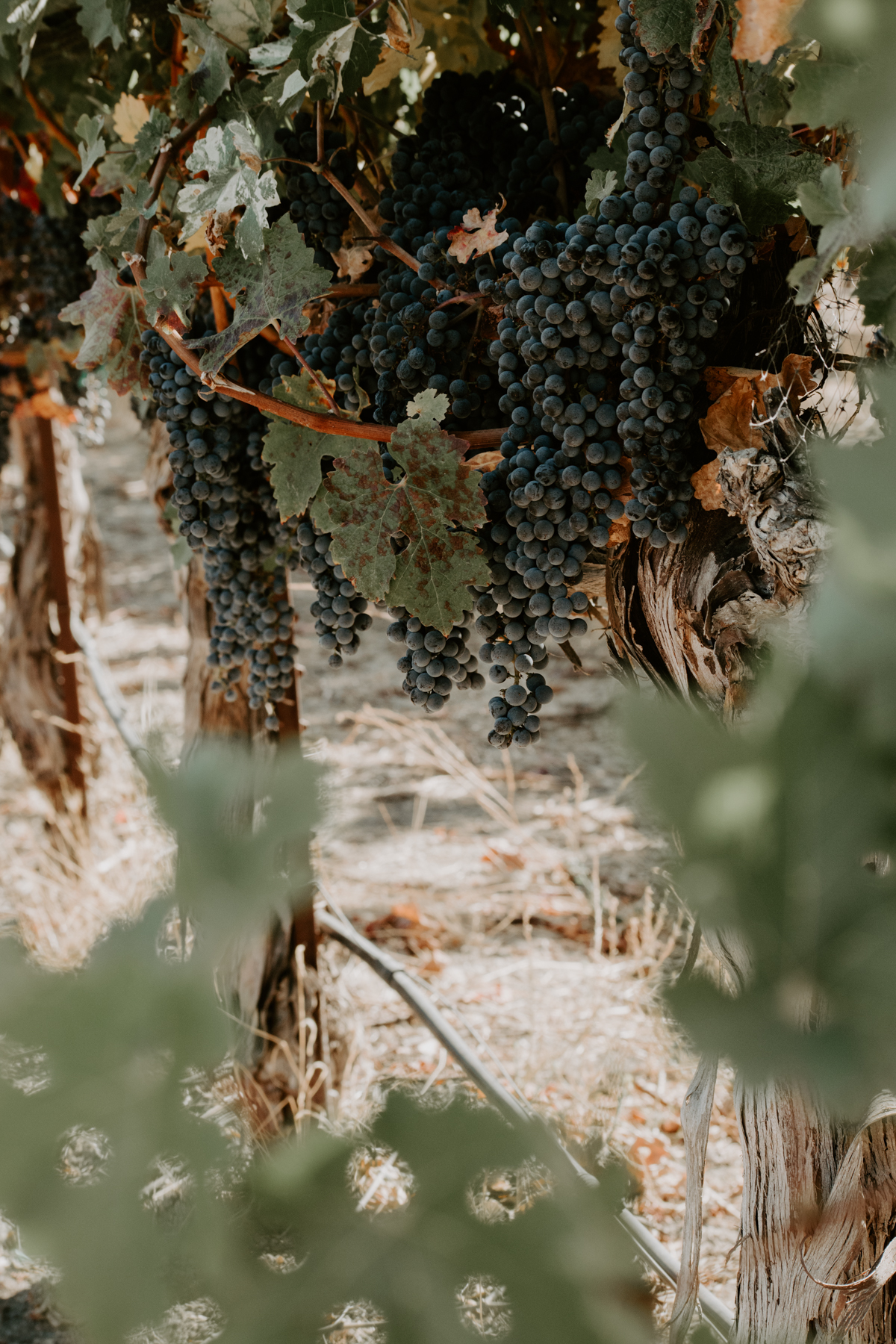 harvest18-1-4.jpg