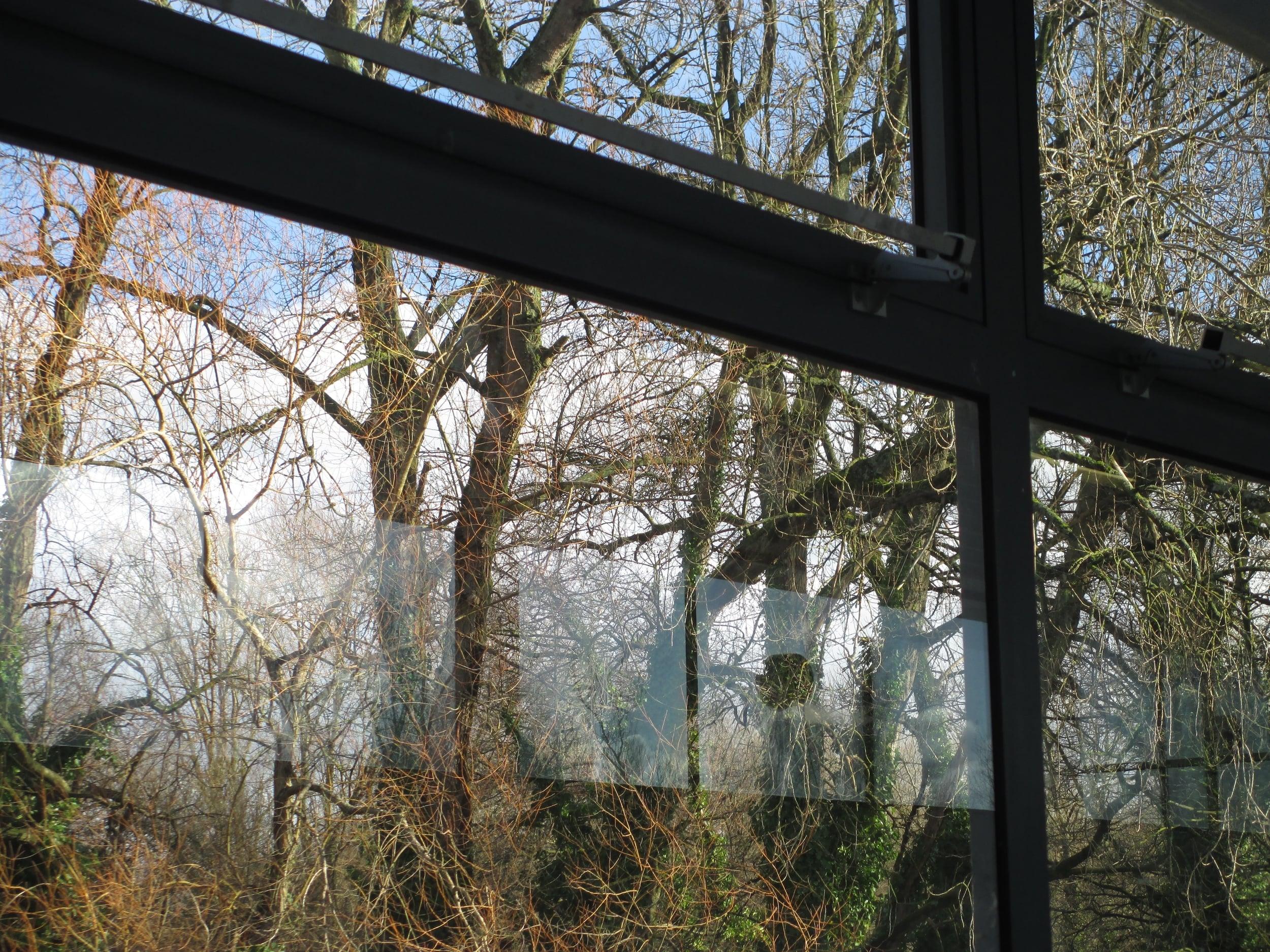 Window Reflections II