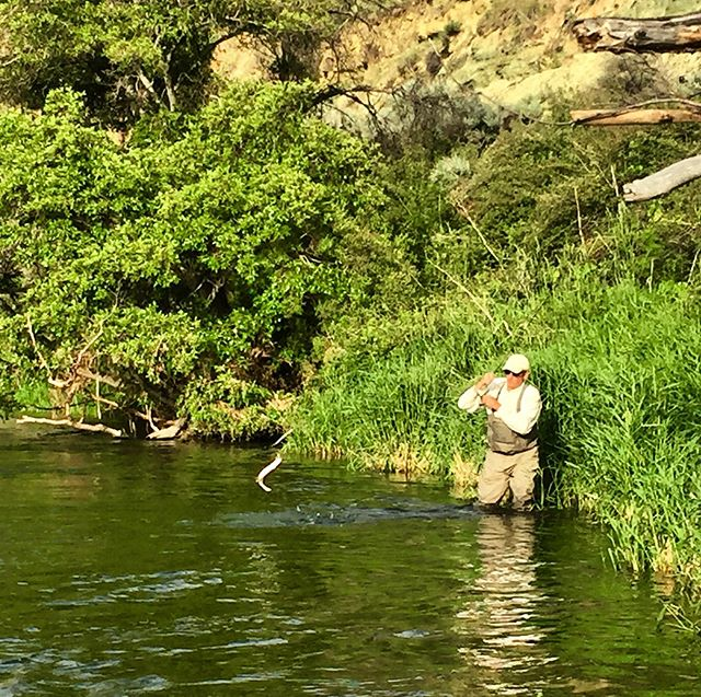 We've got lift off! #deschutesriveranglers #lostcoastoutfitters #dryflyfishing #campingtrips #catchandrelease #fishinginoregon #deschutesriver #keepemwet #thepatientangler