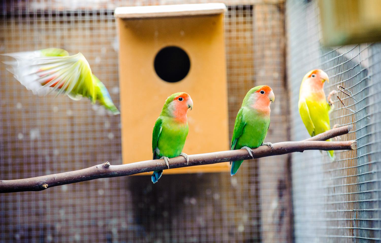 brendans-birds.jpg