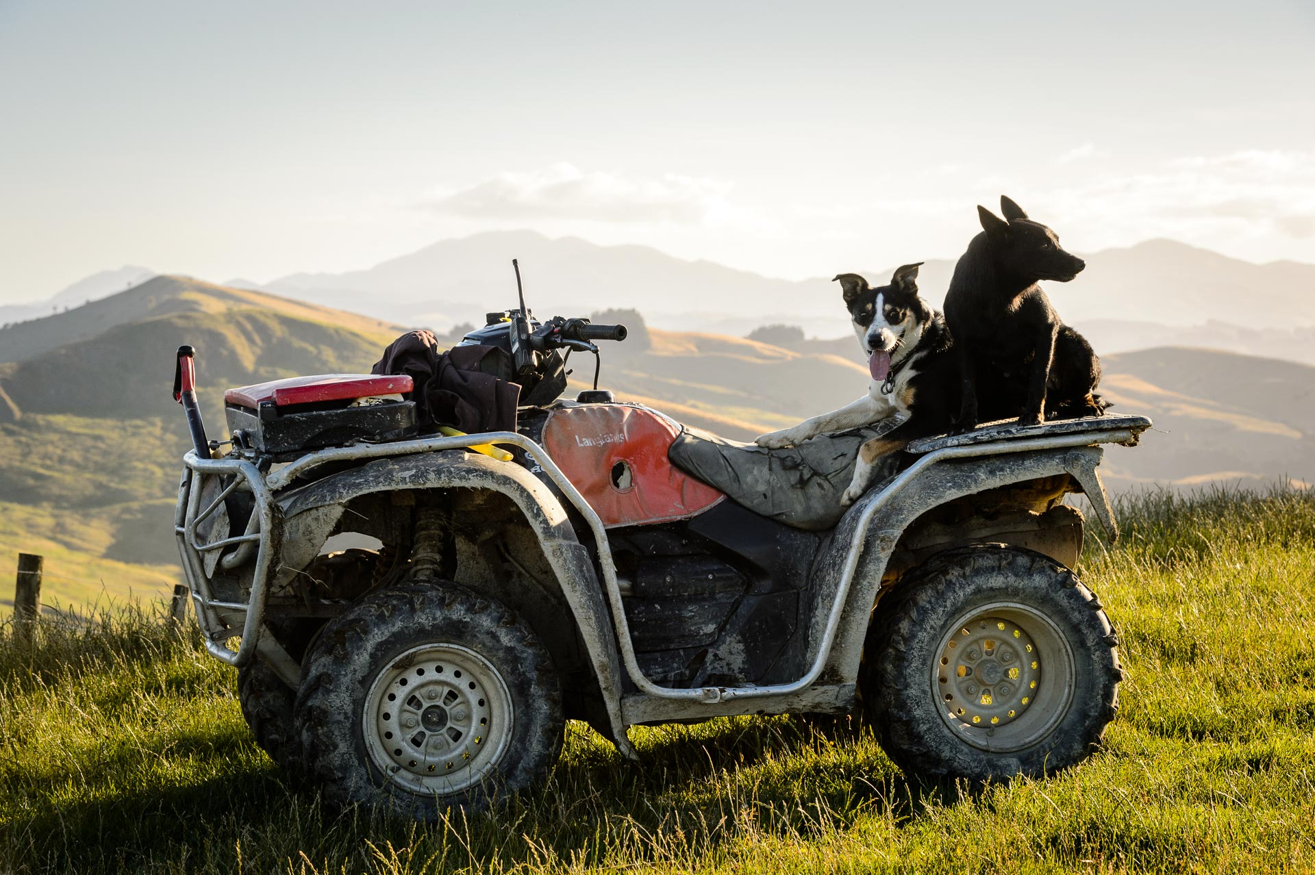 farm-dogs-on-a-quadbike.jpg