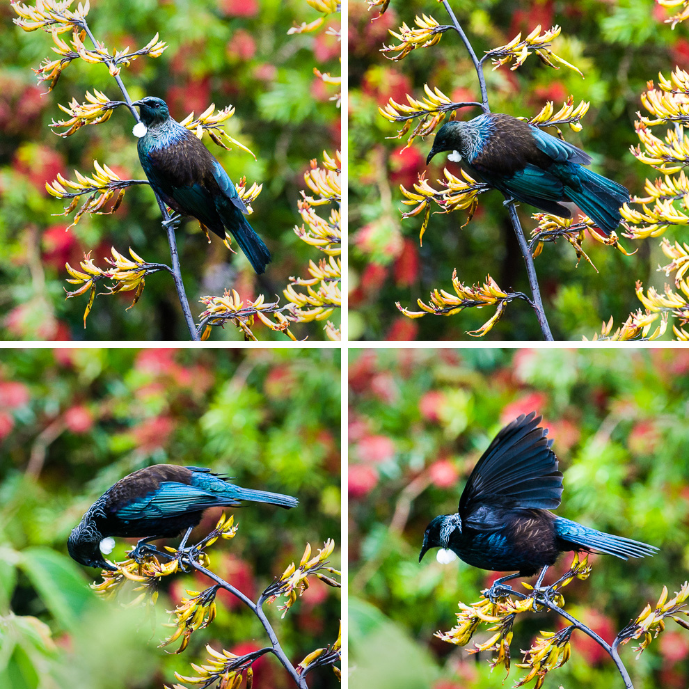 tui-two-by-two.jpg