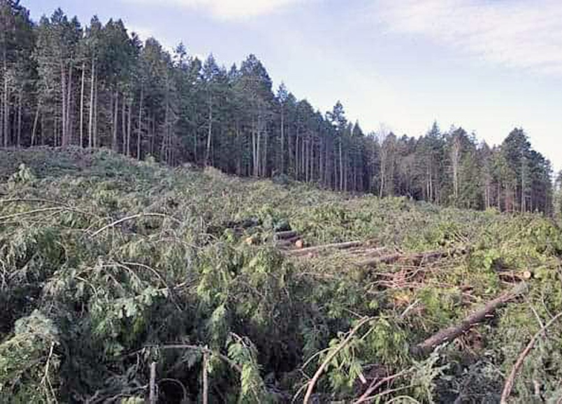 Clear-cut on Tseycum and Tsawout First Nation lands on Saturna Island. Photograph by Nick Claxton.